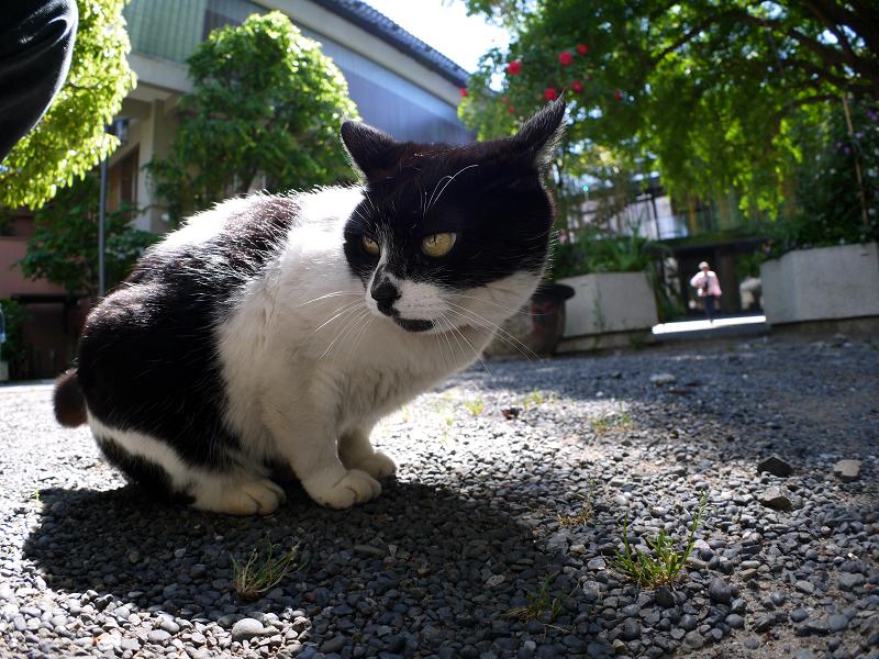 日差しと影と黒白猫2