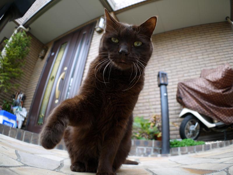焦げ茶猫の猫パンチ1