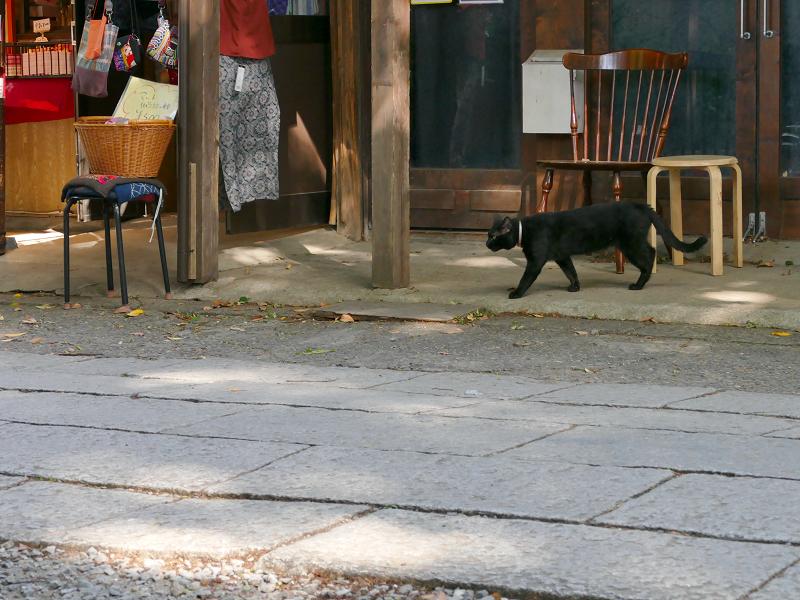 参道を横切る黒猫1