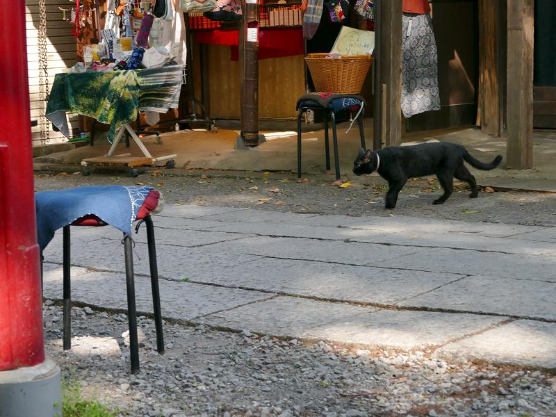 参道を横切る黒猫2