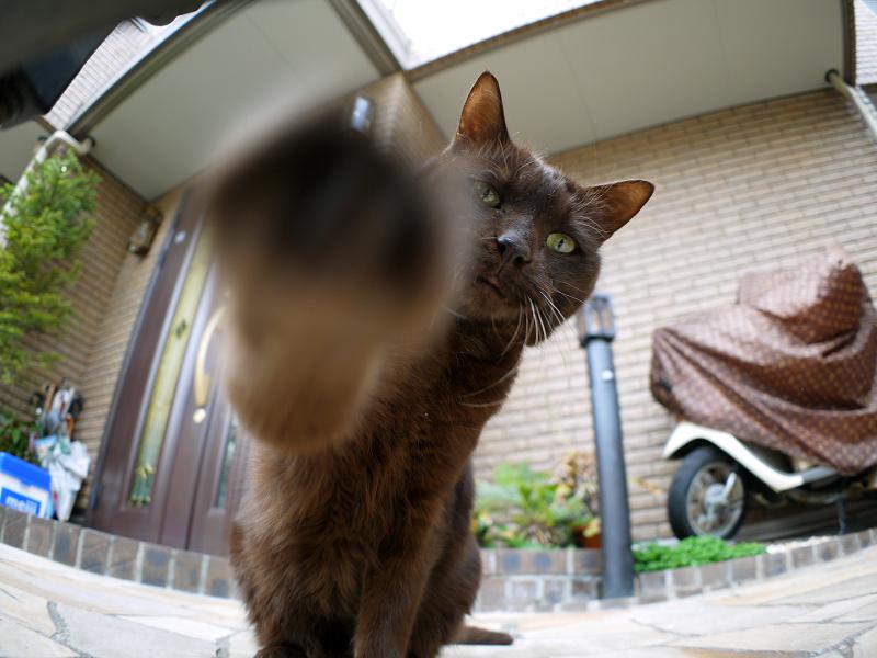 焦げ茶猫の猫パンチ3