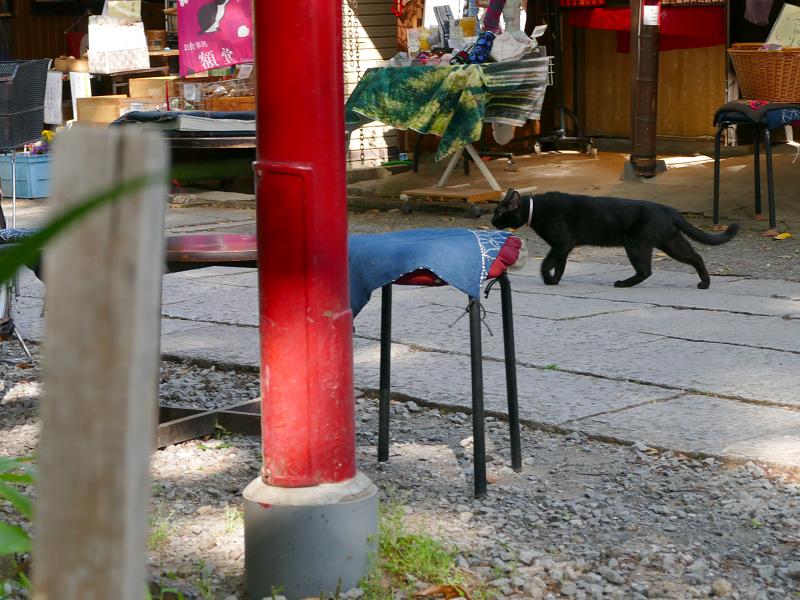 参道を横切る黒猫3