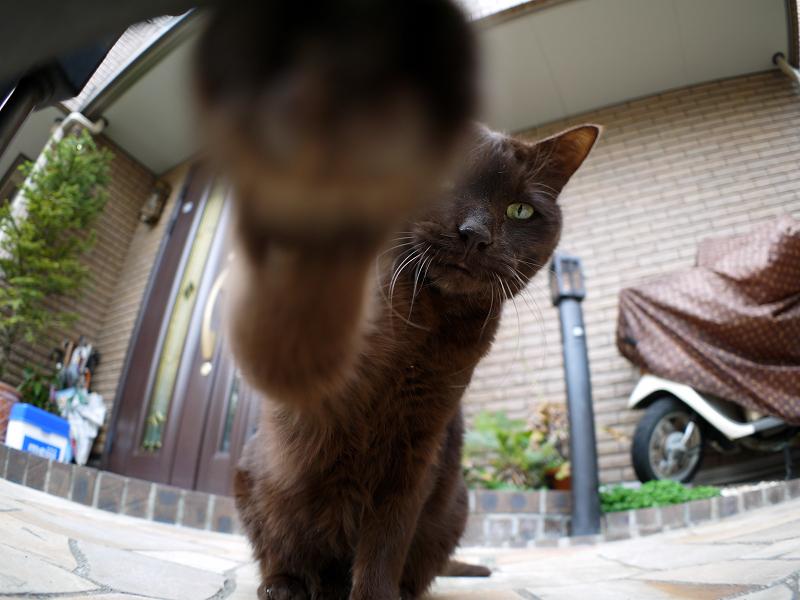焦げ茶猫の猫パンチ4