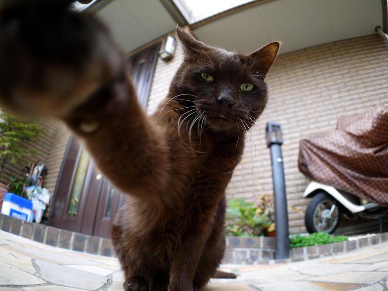 焦げ茶猫の猫パンチ5