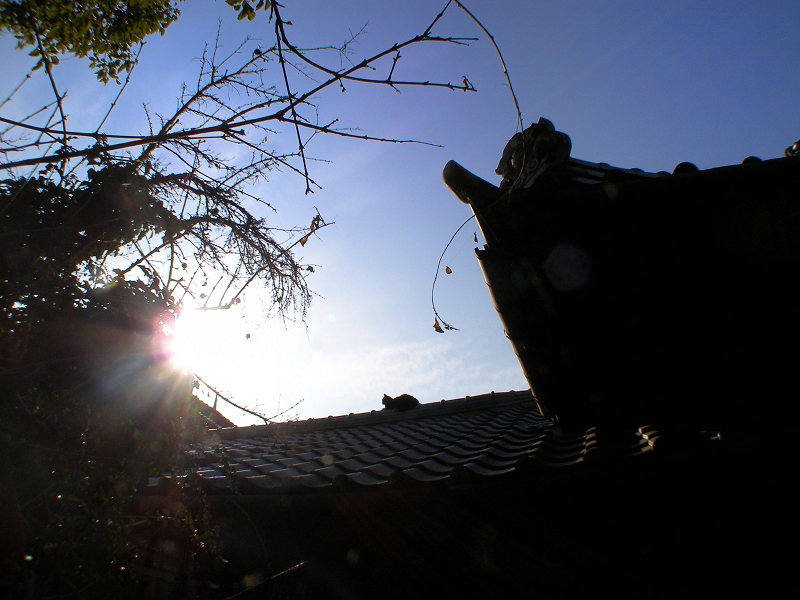 屋根瓦の猫たち3