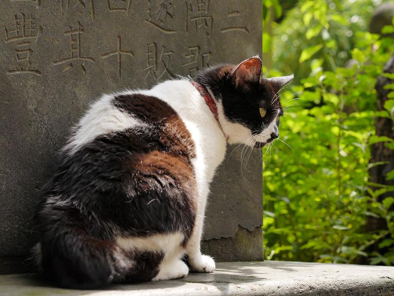 石碑の陰の白黒猫1