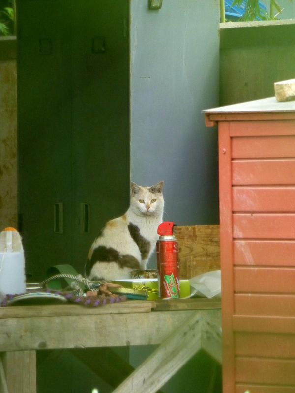 作業台の薄三毛猫1