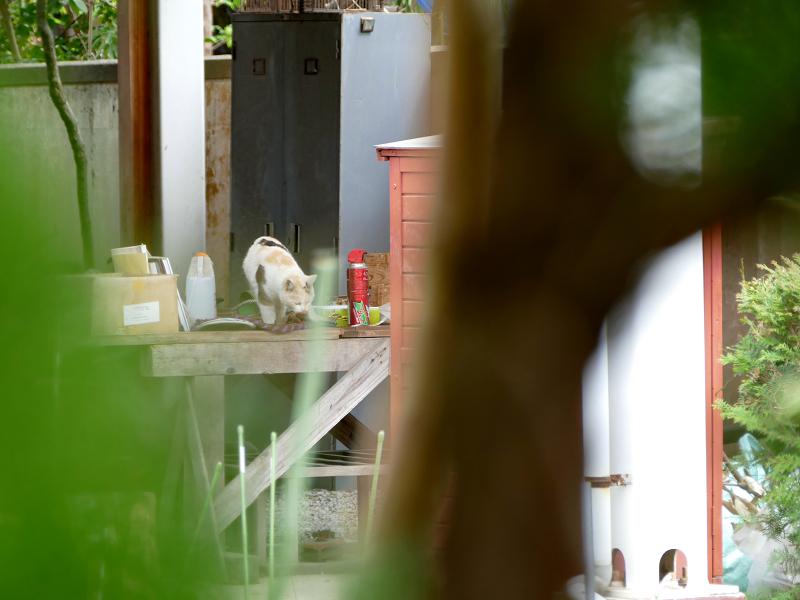 作業台の薄三毛猫2