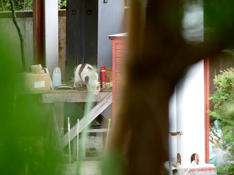 作業台の薄三毛猫3