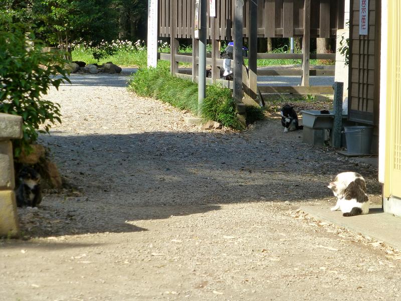 神社参道脇の猫たち3