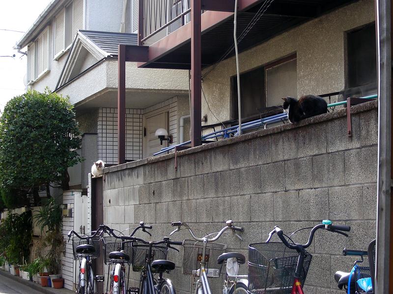 アパートのブロックと猫たち1
