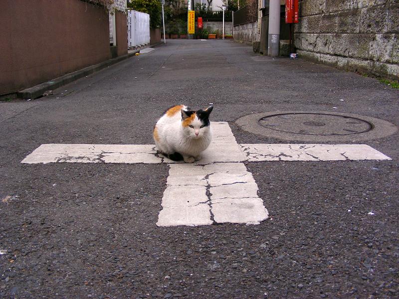 路地交差の三毛猫