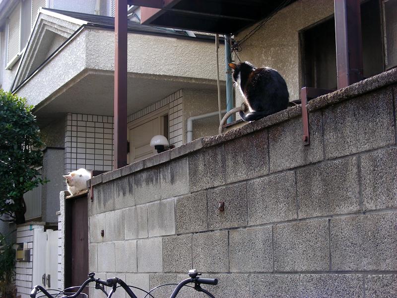 アパートのブロックと猫たち2
