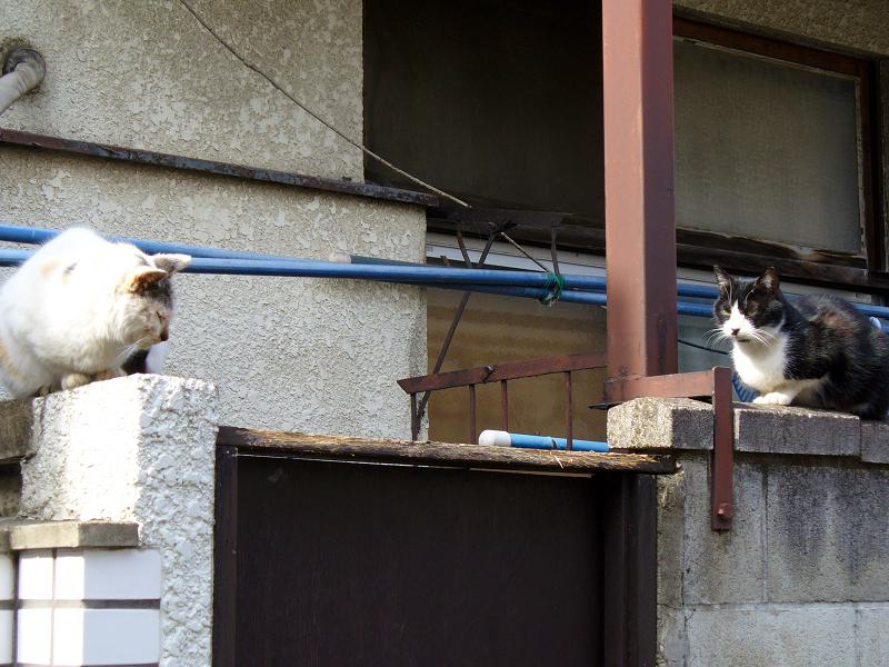 アパートのブロックと猫たち3