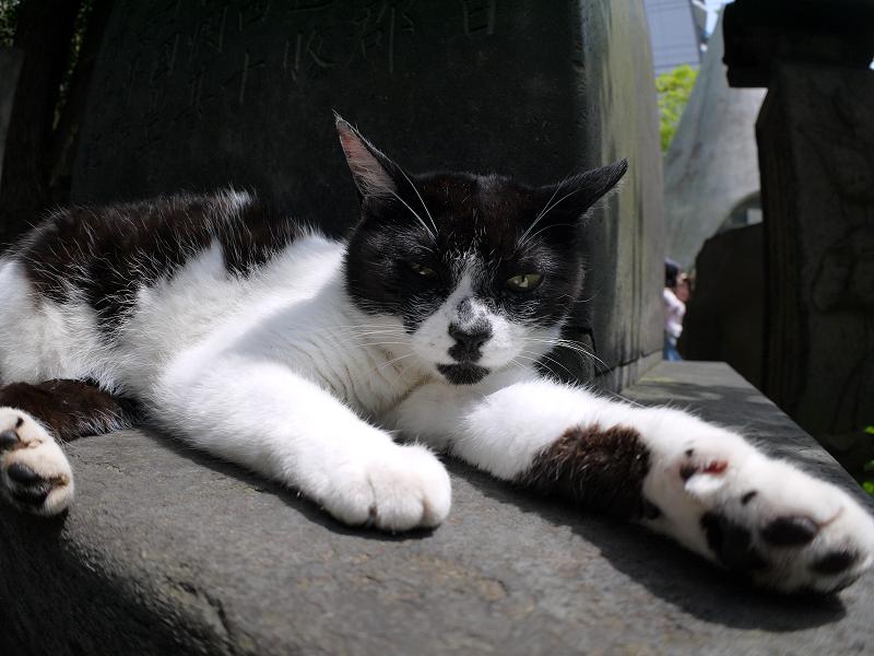 石碑の陰で寛ぐ白黒猫1