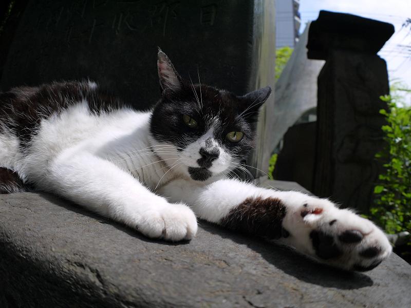 石碑の陰で寛ぐ白黒猫2