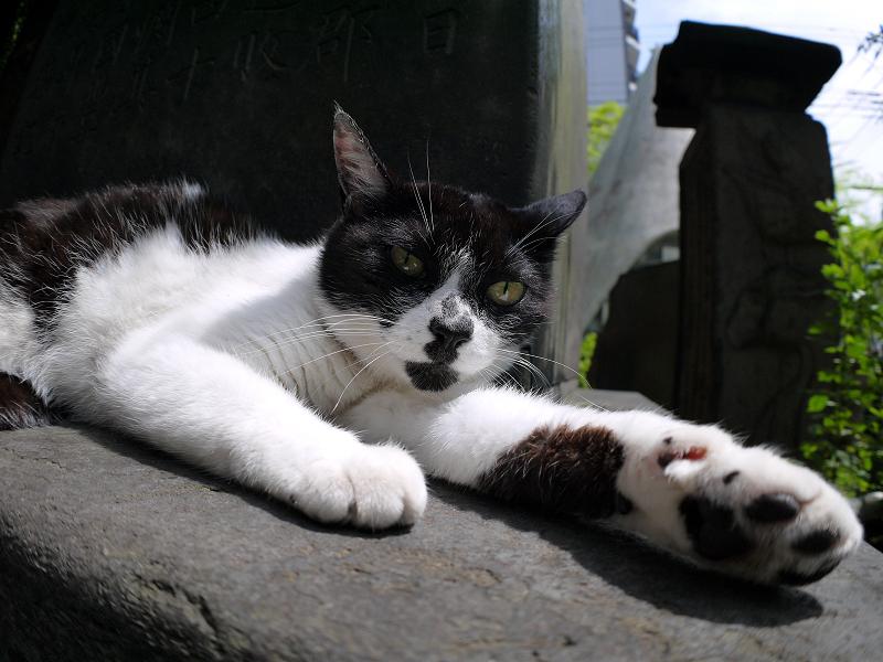 石碑の陰で寛ぐ白黒猫3