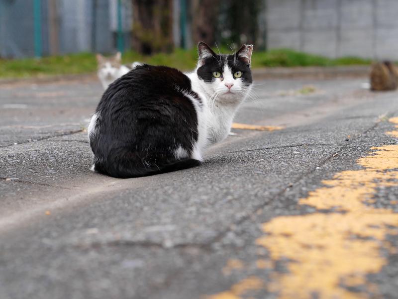 黄色線と猫たち1