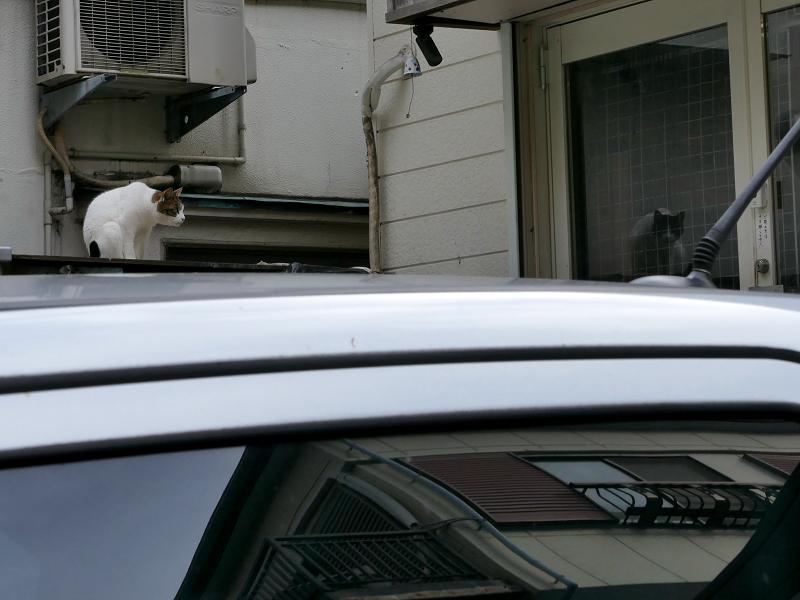 リフレクション猫
