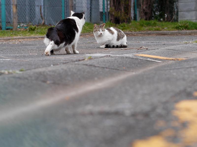 黄色線と猫たち2