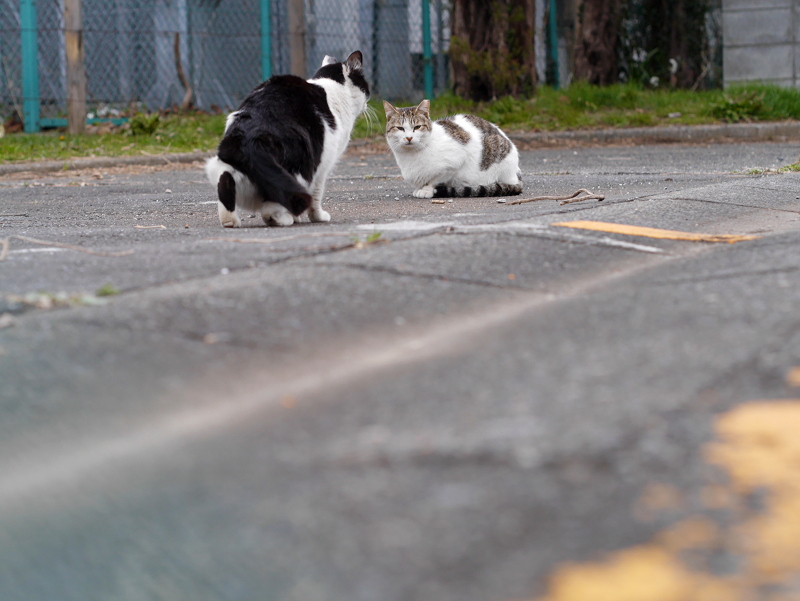 黄色線と猫たち3