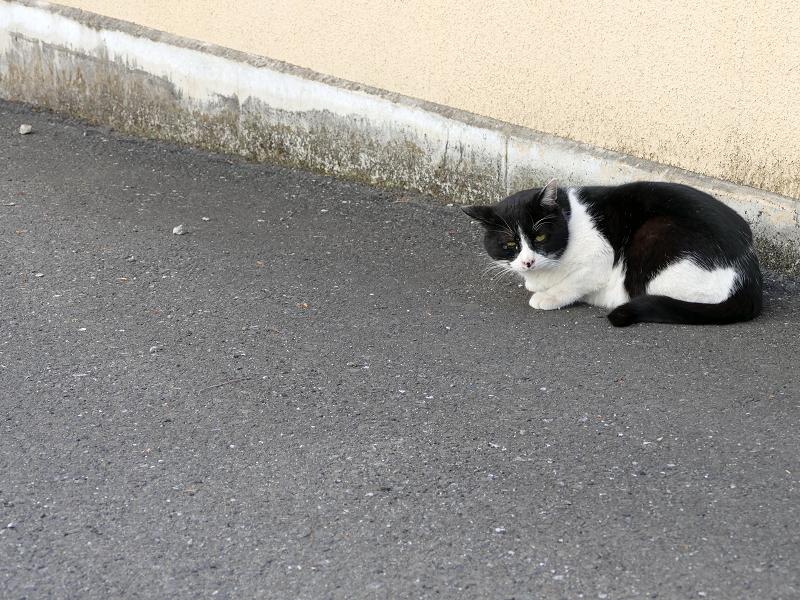 歩き去って行った黒白猫1