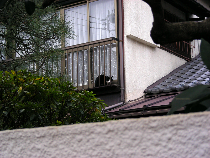 民家二階窓の黒白猫1