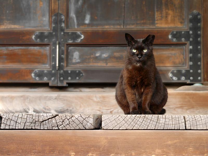 古堂扉前の黒猫1
