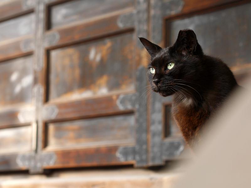古堂扉前の黒猫2