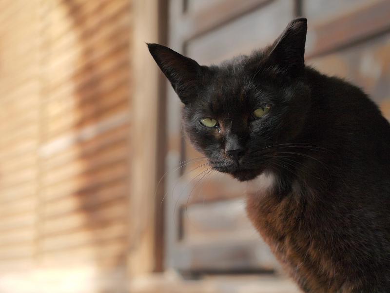 古堂扉前の黒猫3