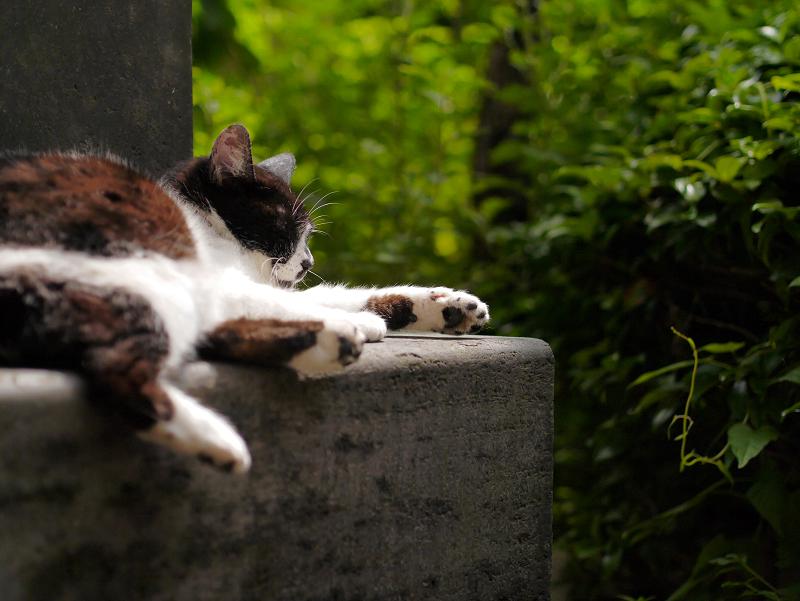 石碑の陰で寝ている白黒猫1