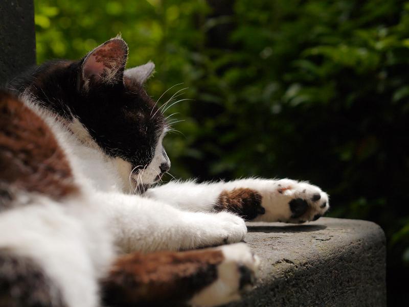 石碑の陰で寝ている白黒猫2