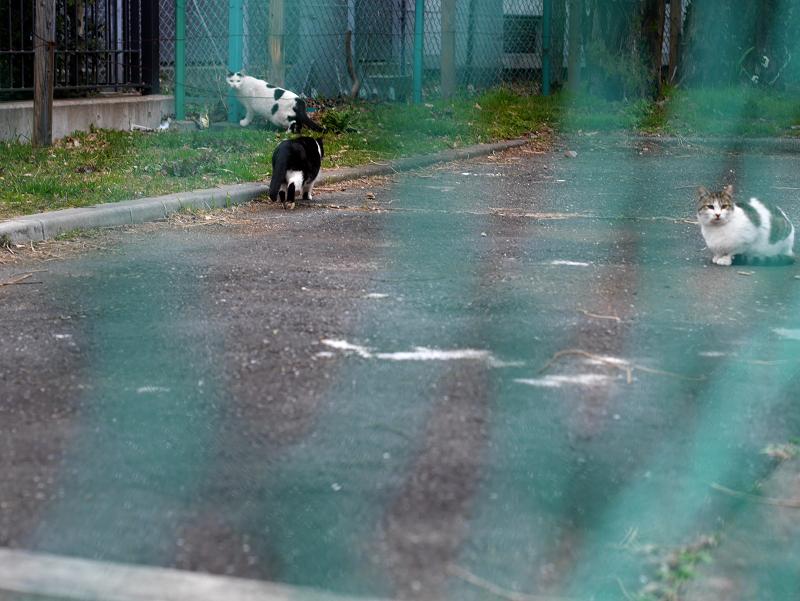 金網フェンスと猫たち1