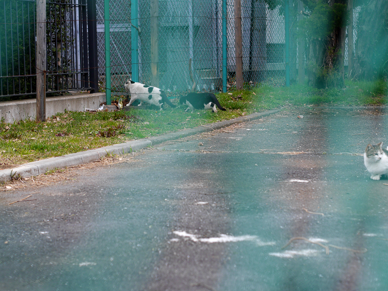 金網フェンスと猫たち2