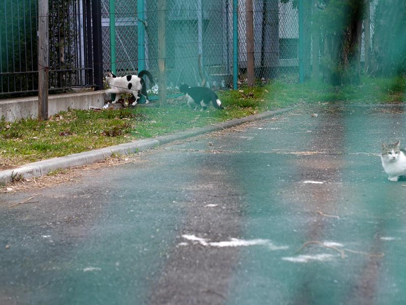金網フェンスと猫たち3