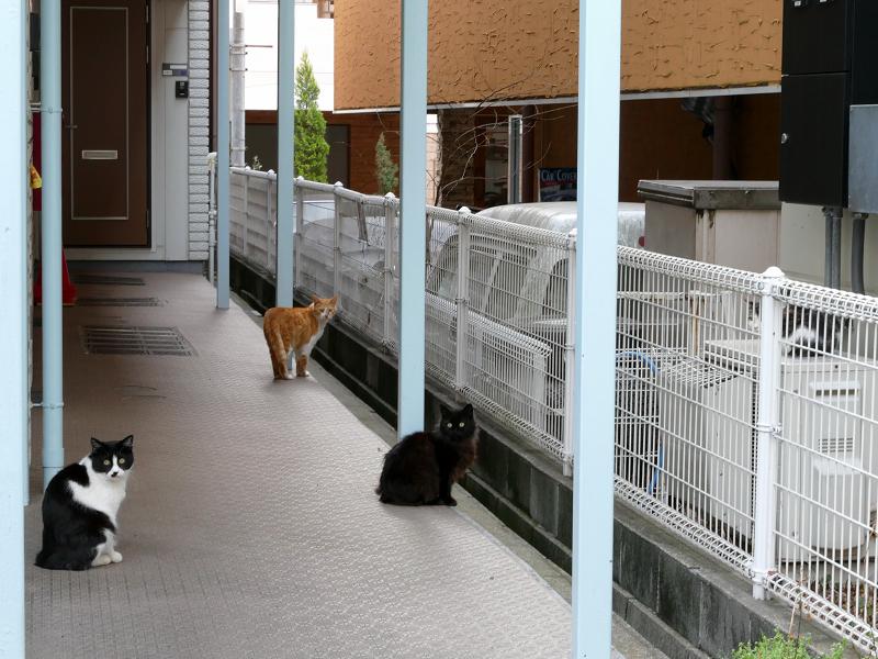 アパート通路の猫たち