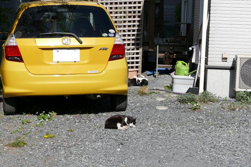 砂利庭の猫たち2
