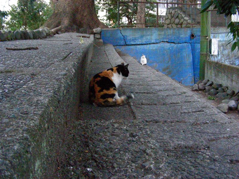夕暮れスタンドの猫たち1