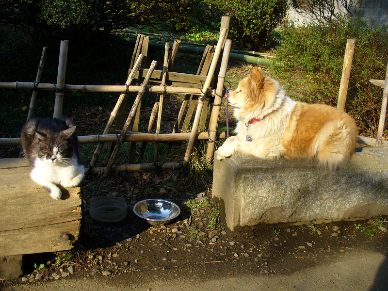 ベンチの上の猫と犬
