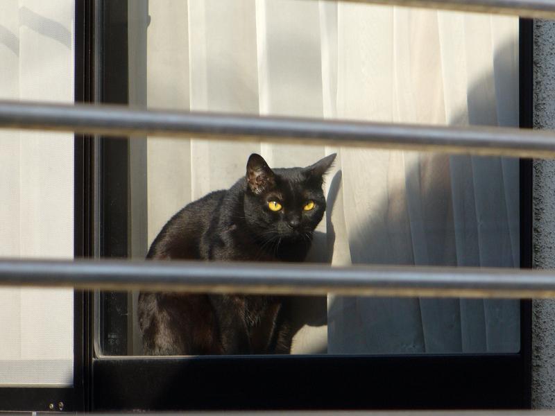 窓の中の黒猫