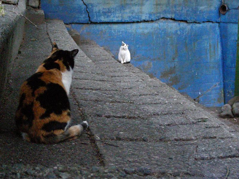 夕暮れスタンドの猫たち2