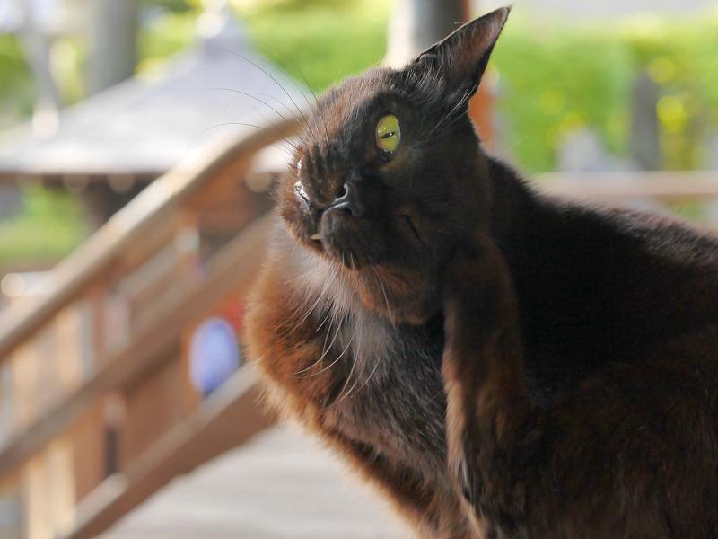 堂前でカキカキする黒猫