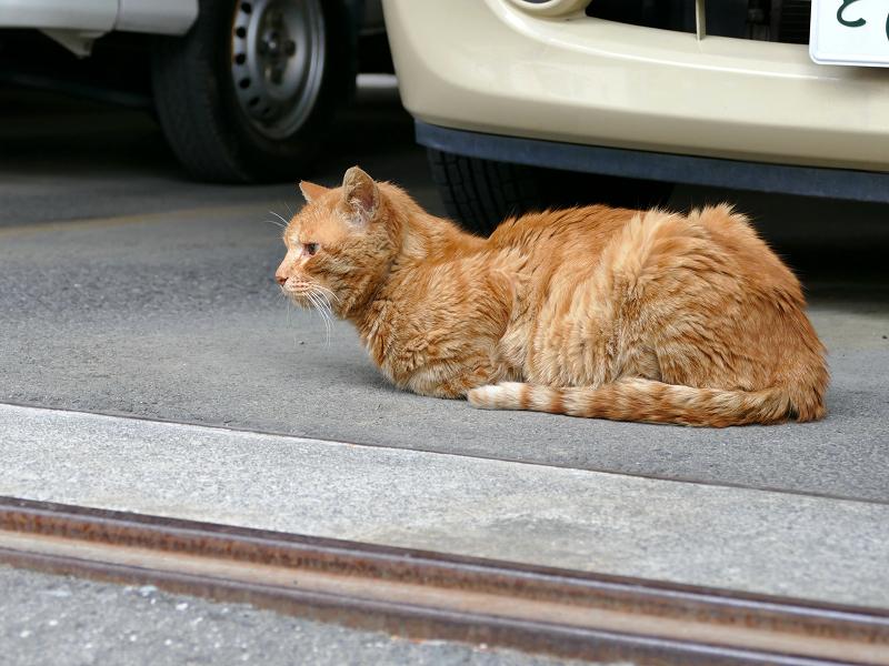 ガレージの茶トラ猫1