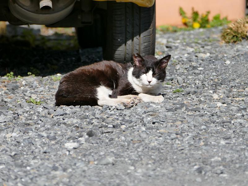 タイヤ前の黒白猫1