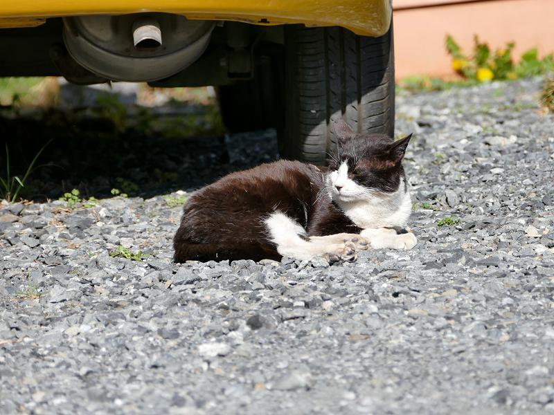 タイヤ前の黒白猫2