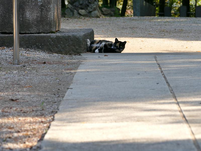 鳥居台座と三毛猫3