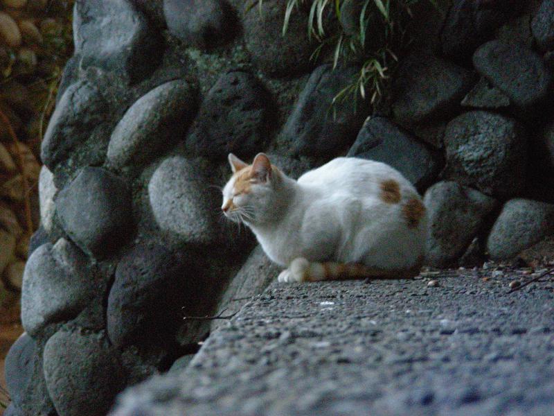 朝いち猫と夕暮れに再会1