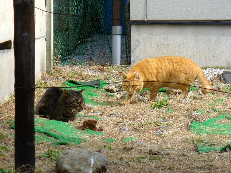 空地草むらの猫たち1