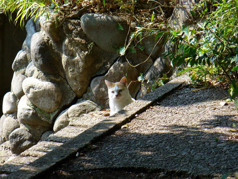 公園のスタンドの白茶猫1