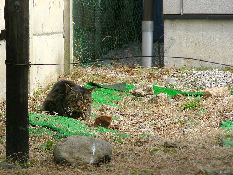 空地草むらの猫たち2